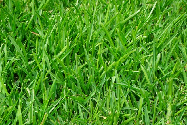 tapis d'herbe